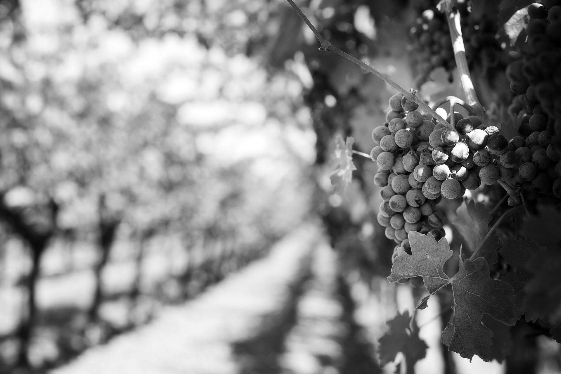 raisin noir et blanc